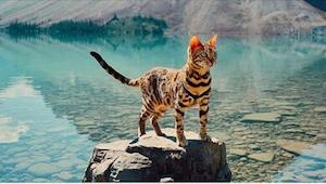 Ten kot bengalski ma swoją pasję... A dzięki niej jego właścicielka nieźle zarab