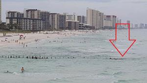 To nie rekin tak przeraził ludzi na plaży. To było coś znacznie gorszego.