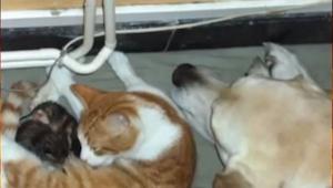 Gdy okociła się, pies postanowił wkroczyć do akcji... Tego nikt się nie spodziew