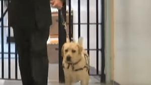 Żołnierz wchodzi z psem do więzienia. Zobaczcie jak zwierzę reaguje, kiedy widzi