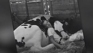 Chłopiec od małego wychowuje swoją krowę. Zdjęcie obrazujące ich więź podbiło se
