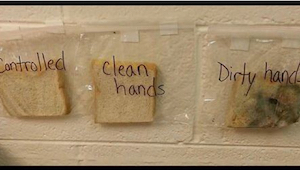 Twoje dziecko nie myje rąk przed jedzeniem? Zrób ten eksperyment w domu i zobacz