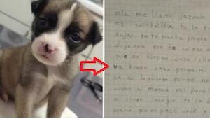 Rodzice zafundowali dziecku traumatyczne przeżycie, bo pies nie jest rasowy... B