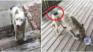 Na jej ganku pojawił się przerażony pies. Pomogła mu w najlepszy z możliwych spo