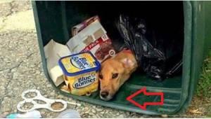 Przeprowadzała się do swojego chłopaka, więc wyrzuciła wszystkie zbędne rzeczy..