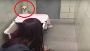 Przerażony pies ukrywa się w kącie, ale gdy widzi, co trzyma wolontariuszka, dos