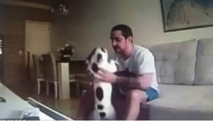 Odkąd zamieszkał z nią narzeczony, jej psy zaczęły się dziwnie zachowywać. Dzięk