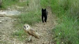 Kot zbliża się do sowy. To, co za chwilę zrobi, zaskoczyło miliony ludzi!