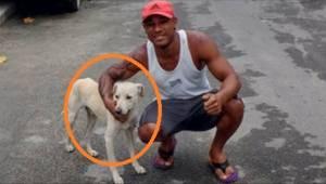 Chciał kopnąć bezpańskiego psa, który go obsikał, ale zamiast tego zrobił ostatn
