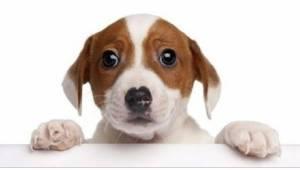 Psy są sprytniejsze niż nam się wydaje! I mamy na to dowody.