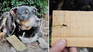 Właściciele znaleźli swojego zmęczonego psa na ganku. Gdy przeczytali, co ich są