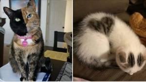15 kotów, które zaskakują tym, jak wyglądają...