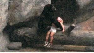 Chłopiec spadł na wybieg goryli i stracił przytomność. Uratowała go niezwykła go