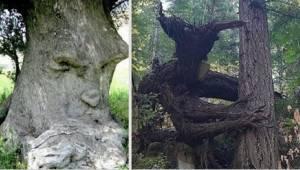 Natura potrafi być bardzo kreatywna! Zobaczcie 20 najdziwniejszych drzew świata.