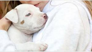 Naukowcy doszli do ciekawych wniosków na temat psów i ich wpływu na alergie u dz