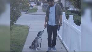 Mężczyzna adoptował starego, opuszczonego psa. Pewnego dnia na spacerze psiak pr