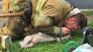 Strażak wyniósł z płonącego domu martwego psa. Chwilę później wszyscy płakali ze