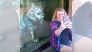 Tygrys staje za ciężarną kobietą. Gdy ta pokazuje mu swój brzuch, reaguje w słod