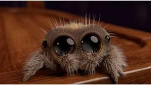 Jeśli boisz się pająków... koniecznie obejrzyj to nagranie!
