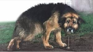 Chory pies przez 10 lat był przykuty do łańcucha. Zobaczcie wyjątkowy moment, w