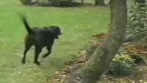 Właściciel mówi swojemu psu, że ma się ukryć. Reakcja psa rozbawi Was do łez!