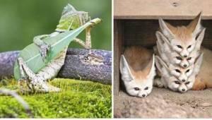 23 zdjęcia zwierząt przyłapanych w idealnym momencie. Numer 7 idealnie nada się