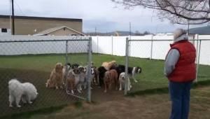 Wywoływała po imieniu 16 psów. Gdy zobaczysz reakcję ostatniego padniesz ze śmie
