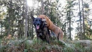 Jego pies codziennie znikał w lesie. Gdy właściciel w końcu odkrył, z kim się ta