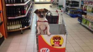 Kierownik supermarketu miał dość widoku psów pozamykanych w samochodach, więc za