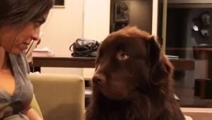 Właścicielka powiedziała do obrażonego psa że go przeprasza. To co zrobił pies j