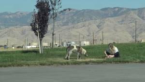 Wolontariusze zostali wezwani do bezdomnego psa. Nie sądzili, że będzie on TAK d