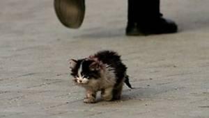 Wszyscy ludzie bali się dotknąć tego kota, wtedy on go wziął na ręce i stało się