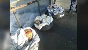 Dworzec autobusowy otworzył swoje drzwi bezpańskim psom. Zobaczcie ich reakcję,