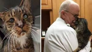 Bezpański, stary kot w końcu trafił pod opiekę weterynarza. To zmieniło całe jeg
