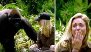 Uratował dwa goryle, a po 6 latach pojechał je odwiedzić wraz z nową żoną. Pomim