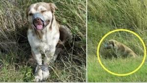 Skazał własnego psa na pewną śmierć. Tylko łut szczęścia sprawił, że ktoś go ura