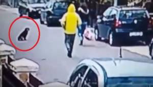 Podejrzany mężczyzna zaatakował od tyłu kobietę. Nagranie pokazujące, jak ratuje