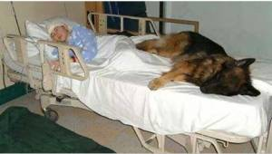 Przed śmiercią napisała poruszający list w imieniu swojego psa. Gdy nowi właścic