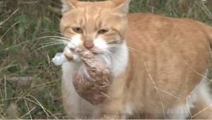 Bezpańska kotka nie chce jeść, o ile jedzenie nie jest w worku. Pewnego dnia pos