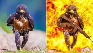 9 zabawnych zdjęć zrobionych przy użyciu Photoshopa, która pokazują, że wyobraźn