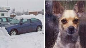 Weterynarze ostrzegają - tej zimy samochód może być śmiertelną pułapką dla psa.
