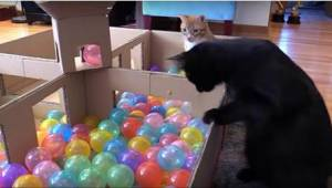 Jeśli chcesz uszczęśliwić kota, sprezentuj mu TO! Co za reakcja!