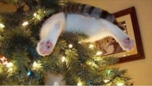 Te koty nie wiedzą, co to zakaz zbliżania się do choinki! Zobaczcie zabawne nagr