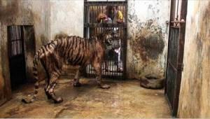 Zoo śmierci - zwierzęta zostawia się tam na pewną śmierć z głodu!