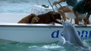To co zrobił ten delfin jest niesamowite! Sami zobaczcie!
