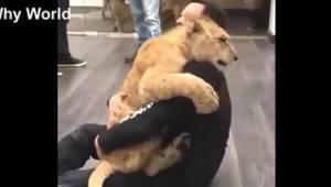 Tak kochają tylko zwierzęta! Zobaczcie wyjątkowo urocze nagranie.