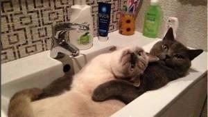 18 zdjęć, które pokazują koty... z innej strony.