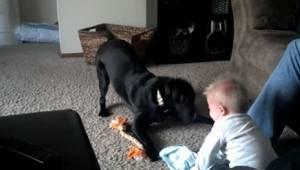 To, jak ten pies bawi się z dzieckiem, które jest jeszcze za małe na to, jest pr