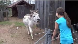 Cudowne nagranie pokazujące, jak osiołek cieszy się na widok swojej małej przyja