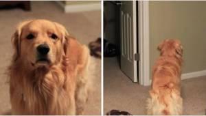 Za drzwiami czekała na niego niespodzianka roku! Musicie zobaczyć jego reakcję.